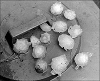 MM6 242a Giant Hailstones 1963